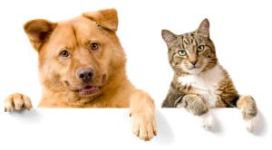 Consider a pet trust to make sure your pets are cared for after you are gone.